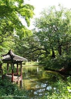 Secret Garden at Changdeokgung Palace in Seoul | Lindsay Mickles Photography | South Korea