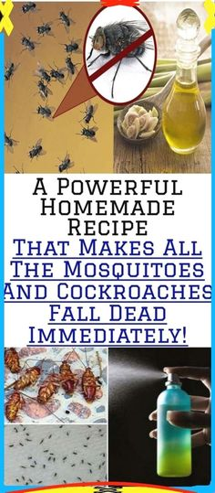 A Powerful Homemade Recipe That Makes All The Mosquitoes and Cockroaches Fall Dead Immediately! Health And Fitness Articles, Health And Nutrition, Health Tips, Health Facts, Women's Health, Health Care, Herbal Remedies, Health Remedies, Natural Remedies