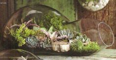 Roost Recycled Glass Bubble Terrarium, Double
