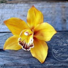 #cukorvirag #cukorviragtanfolyam #cymbidiumorchidea #edeskisshobbim