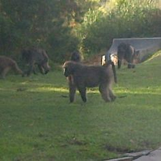When these guys visit, it's really not fun! Horses, Guys, Garden, Animals, Garten, Animales, Animaux, Lawn And Garden, Gardens