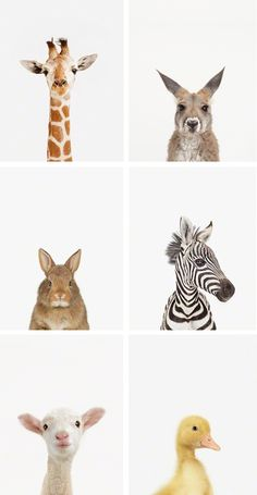 little-darlings-animal-print-shop