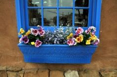 best plants for window boxes by maura