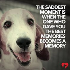 So true losing a pet, losing a dog quotes, dog quotes sad, dog loss Losing A Dog Quotes, Dog Quotes Love, Losing A Pet, Sad Quotes, Dog Sayings, Qoutes, Dog In Heaven Quotes, Quotes About Dogs, Dog Loss Quotes