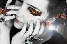 Galeria de fotos para tu blog o webpage: Butterfly Pictures-Mariposas
