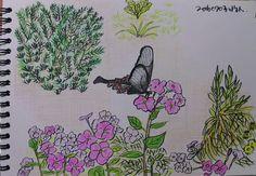나비와 꽃