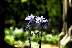 Bluebells in Bunhill