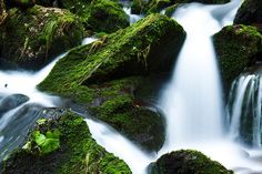 Creek flowing over green forest landscape - the contrast of green and white, stillness and flow. Green Landscape, Forest Landscape, Nature Sounds, Water Company, Seven Falls, World Water Day, Spring Water, Lazy, Paint