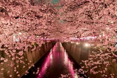 If I had a destination wedding it would be Japan, under the cherry blossoms ❤🌺