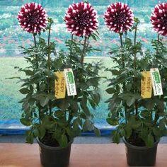 Order Plants Online In Noida Plant Nurseries Hyderabad Bangalore