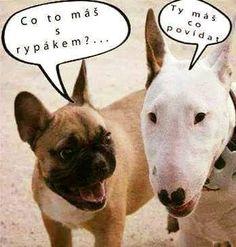 Prasopes nebo krysa naražená na psovi :-)? Animals And Pets, Funny Animals, Supernatural Beings, Aquaman, More Cute, French Bulldog, Haha, Comedy, Funny Pictures