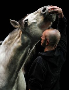 Bartabas Director and performer Bartabas trains 12 year old Le Tintoret on stage at the Sadler's Wells Theatre .Using four horses live on stage and performed by Bartabas himself. The interaction between man and horse during the process of dressage