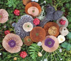 Fotógrafa clica arranjos feitos com cogumelos exóticos | As coisas mais criativas do mundo