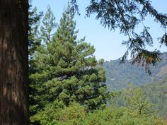 photo: Tracey Appleton    A view from my window in the Santa Cruz Mountains, California. I love it here.