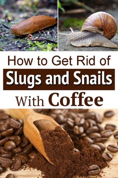 Slugs In Garden, Snails In Garden, Garden Bugs, Garden Pests, Lawn And Garden, Aloe Vera Plant Indoor, Getting Rid Of Slugs, Growing Green Beans, Hosta Gardens
