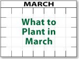 What to Plant Now - Urban Farmer Seeds What to Plant in September! (this site also covers what to p When To Plant Vegetables, Growing Vegetables, Organic Gardening, Gardening Tips, Vegetable Gardening, Flower Gardening, Bucket Gardening, Container Gardening, Urban Farmer