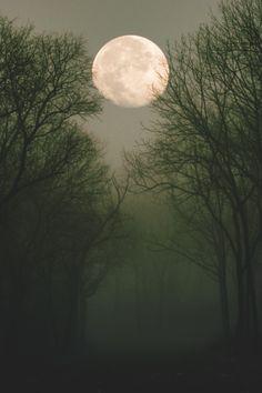wavemotions:  Whitehall at moonlight