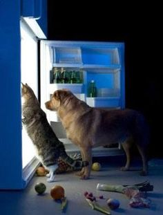 How to store wet dog food once the can is opened / http://www.dailydogstuff.com/wet-dog-food-storage-and-expiration/
