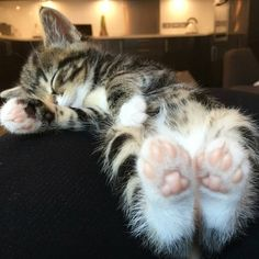 These cute kittens will brighten your day. Cats are incredible friends. Cute Cats And Kittens, Baby Cats, Kittens Cutest, Cutest Pets, Fluffy Kittens, Ragdoll Kittens, Bengal Cats, Fluffy Cat, Cute Baby Animals