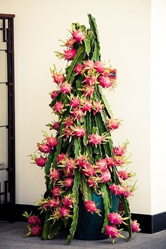 dragon fruit tree   looks like a prop from Star trek, but aight