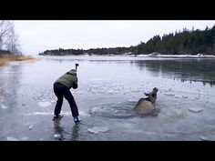 Kind Norwegians save a moose who has fallen thru the ice