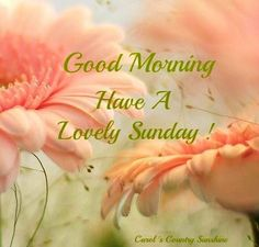 Have a lovely Sunday quotes quote days of the week sunday sunday quotes happy sunday Sunday Morning Quotes, Happy Sunday Morning, Happy Sunday Quotes, Blessed Sunday, Happy Weekend, Sunday Love, Morning Gif, Happy Monday, Good Morning Sunshine