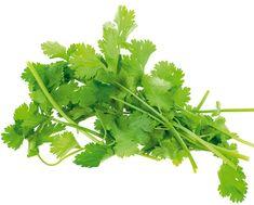 Koriander siaty (Coriandrum sativum) Využitie  Listy sa nesušia, používajú sa len čerstvé. Pridávame ich do jedál až po ich tepelnej úprave. Plody tesne pred použitím rozdrvíme a trochu popražíme, aby sme zvýraznili ich chuť. Nasekané lístky možno pridať do šalátov, ostrých fazuľových polievok, majonéz či dusených pokrmov. Koriandrové semená sa používajú pri nakladaní zeleniny, ale dávajú sa aj do perníkov. V Indii sa bránia zažívacím ťažkostiam zjedením dvoch lyžíc nasekaných koriandrových ... Cilantro Benefits, Cilantro Herb, Coriander Cilantro, Coriander Leaves, Fresh Coriander, Coriander Powder, Herbal Leaves, List Of Spices, Health Benefits Of Ginger