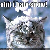 I Hate Winter and Snow