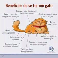 Benefícios de se ter um gato: