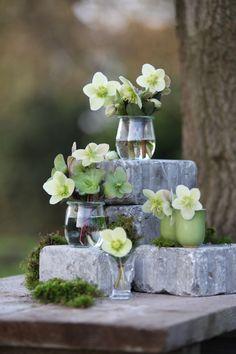 Die 58 Besten Bilder Von Christrosen Roses Decorating Ideas Und
