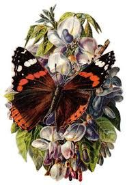 Image result for vintage butterfly