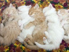 a bundle of sleeping kittens