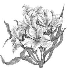 Flowers by Tatiana Trikoz, via Behance