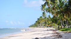 Ilha de Santo Aleixo e Praia dos Carneiros costa de Pernambuco