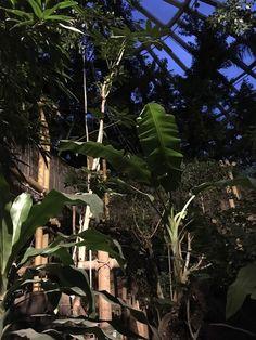 ONTDEK DE JUNGLE CABANA IN PARK HET HEIJDERBOS VAN CENTER PARCS Plant Leaves, Park, Plants, Cabanas, Parks, Flora, Plant