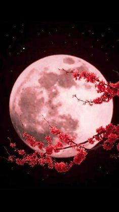 Fabulous Full Moon Photography To Keep You Fascinated - Bored Art Night Sky Wallpaper, Dark Wallpaper, Cute Wallpaper Backgrounds, Galaxy Wallpaper, Pink Moon Wallpaper, Beautiful Nature Wallpaper, Beautiful Moon, Beautiful Landscapes, Moon Pictures