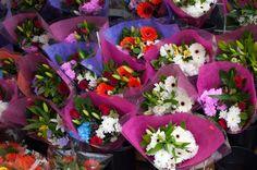 Flowers from an Admirer?! – Little Limelight