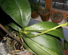 Bir Orkideyi Tekrar Canlandırmanın Yolları - El İşi Örnek