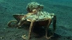 octopus - YouTube