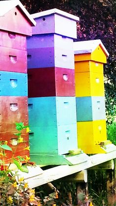 Love the color of these Beehives