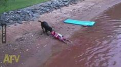 這隻狗狗發現小孩在水中遇溺時馬上跳下水勇救他…不過小孩獲救後卻是一臉被氣到無語的模樣! - boMb01