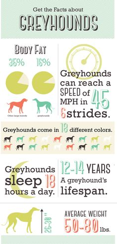 Greyhound infographic on Behance