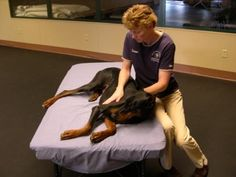 animal massage therapy