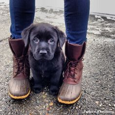Bean boots and puppy