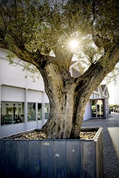Lisboa - São Vicente #Lisboa #SaoVicente The Neighbourhood, Plants, Garden, Lisbon, The Neighborhood, Garten, Planters, Gardening, Outdoor