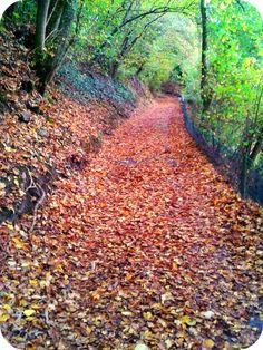Le cose di Mirtilla : Autumn...i love