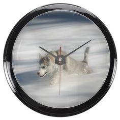 Flying in a Husky Dream Aqua Clocks
