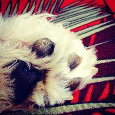 High five Boris! #dog #dogs #cão #cachorro