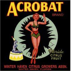 Winter Haven Florida Acrobat Orange Citrus Fruit Crate Label Art Print | eBay