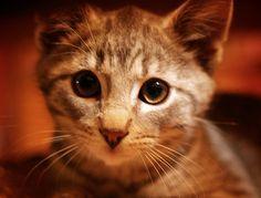 10 consejos para limpiar la orina del gato